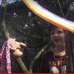 Von Schmetterlingen und Noahs Tieren: Zwei Andachten für Große und Kleine