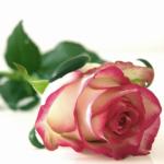Unser Online-Sonntag am 14. Februar - Valentinstag!